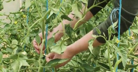 medewerkers bewerkt beplanting